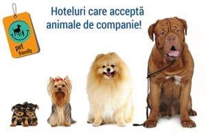 Accepta Animale de Companie